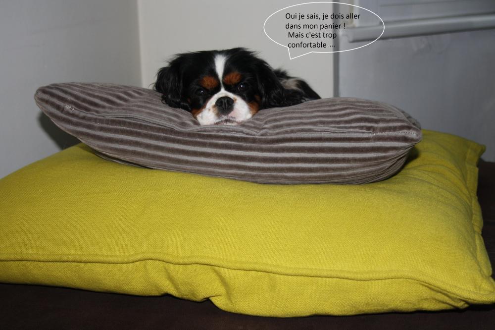 mon chien aussi aime le confort blog z dio. Black Bedroom Furniture Sets. Home Design Ideas
