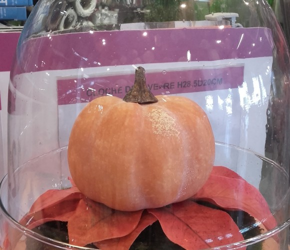 Venez préparer Halloween avec nous …