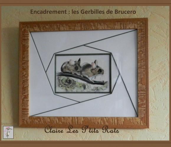 45 – Cadre Les Gerbilles de Brucero (Février 2016 – Encadrement – biseau / diaphragme)