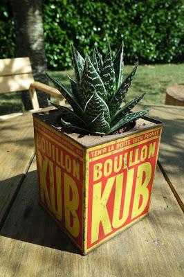 DIY // Une plante au look vintage