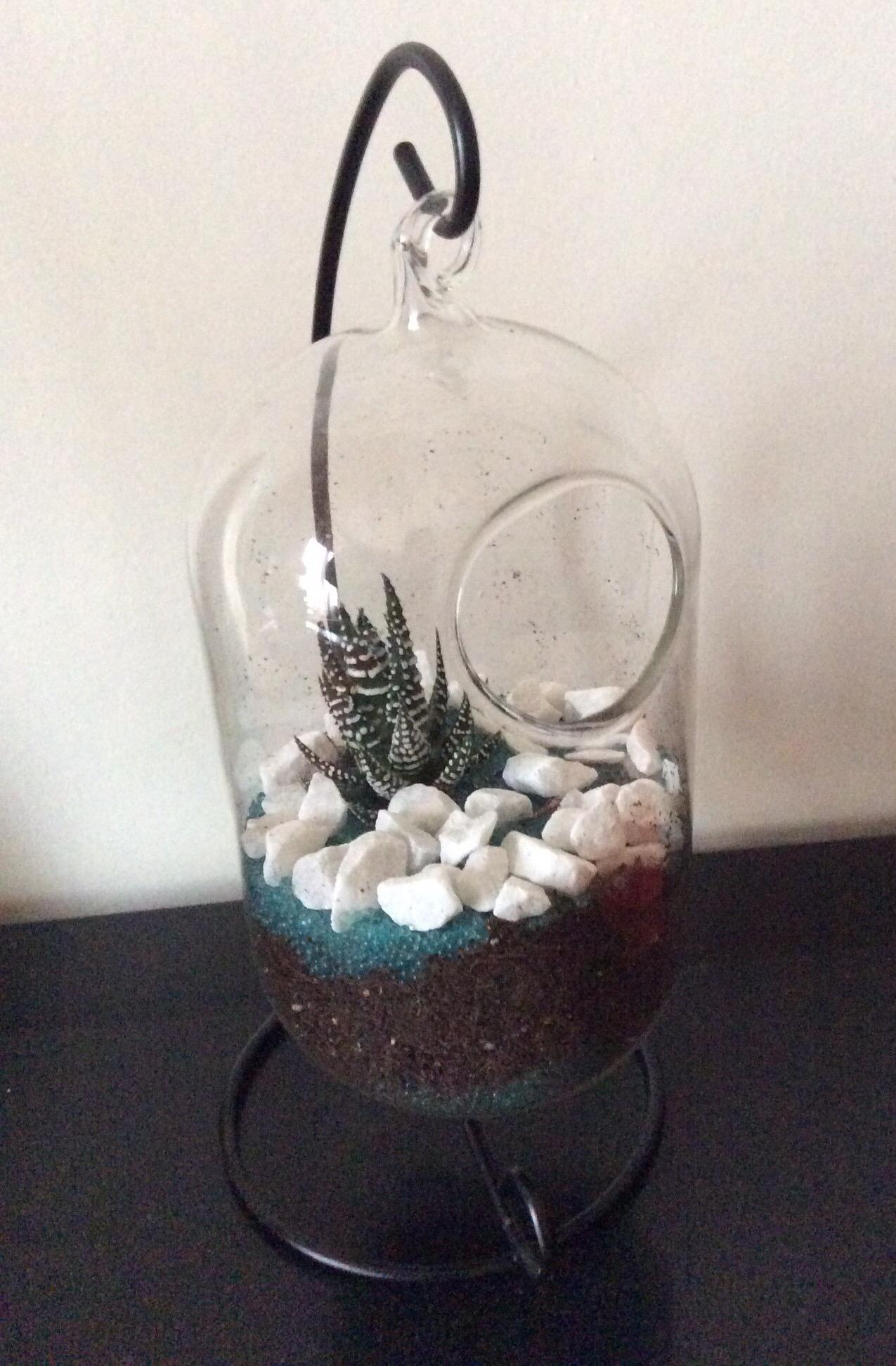Créer avec un cactus