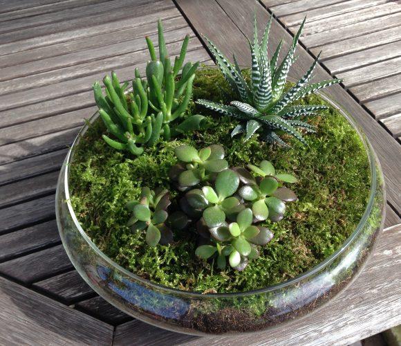 Composition de plantes succulentes