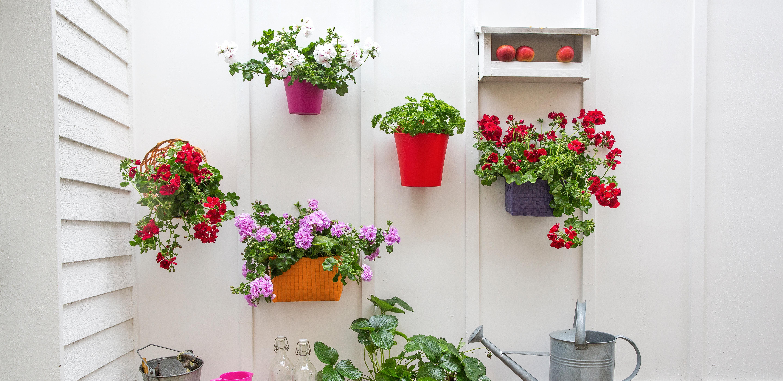 Conseils déco : des géraniums pour vos petits espaces !