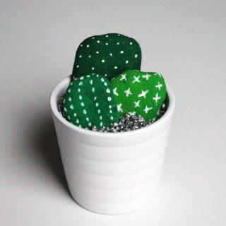Cactus forts comme la pierre !