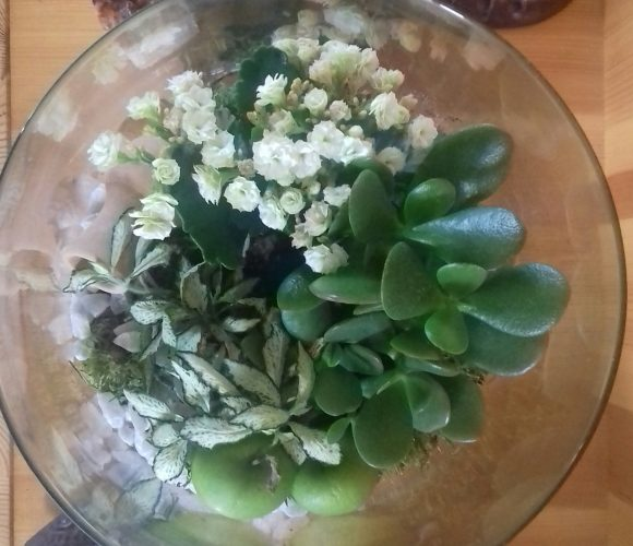 Mon terrarium fleuri ?