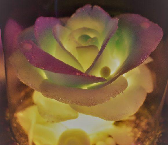 Ma rose de glace
