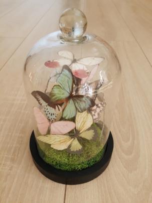 Papillons sous cloche