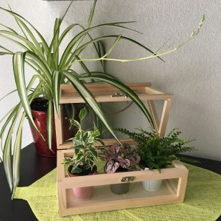 J'ai testé pour vous le terrarium en bois brut