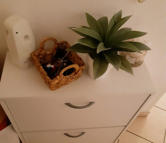 La plante agave pot blanc