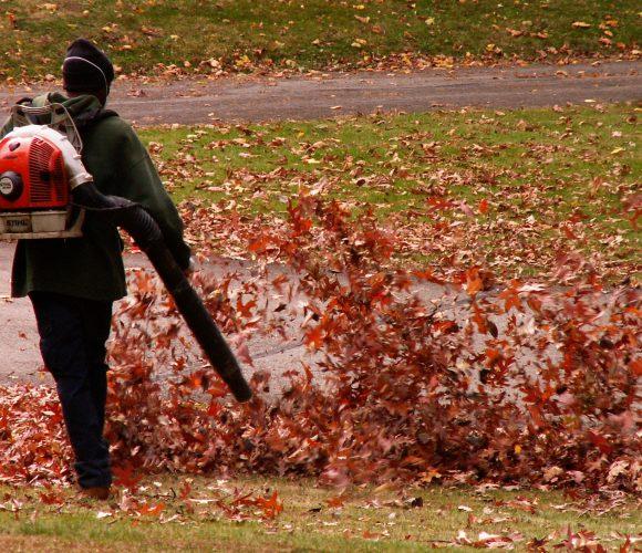 Meilleurs souffleurs thermiques de feuilles