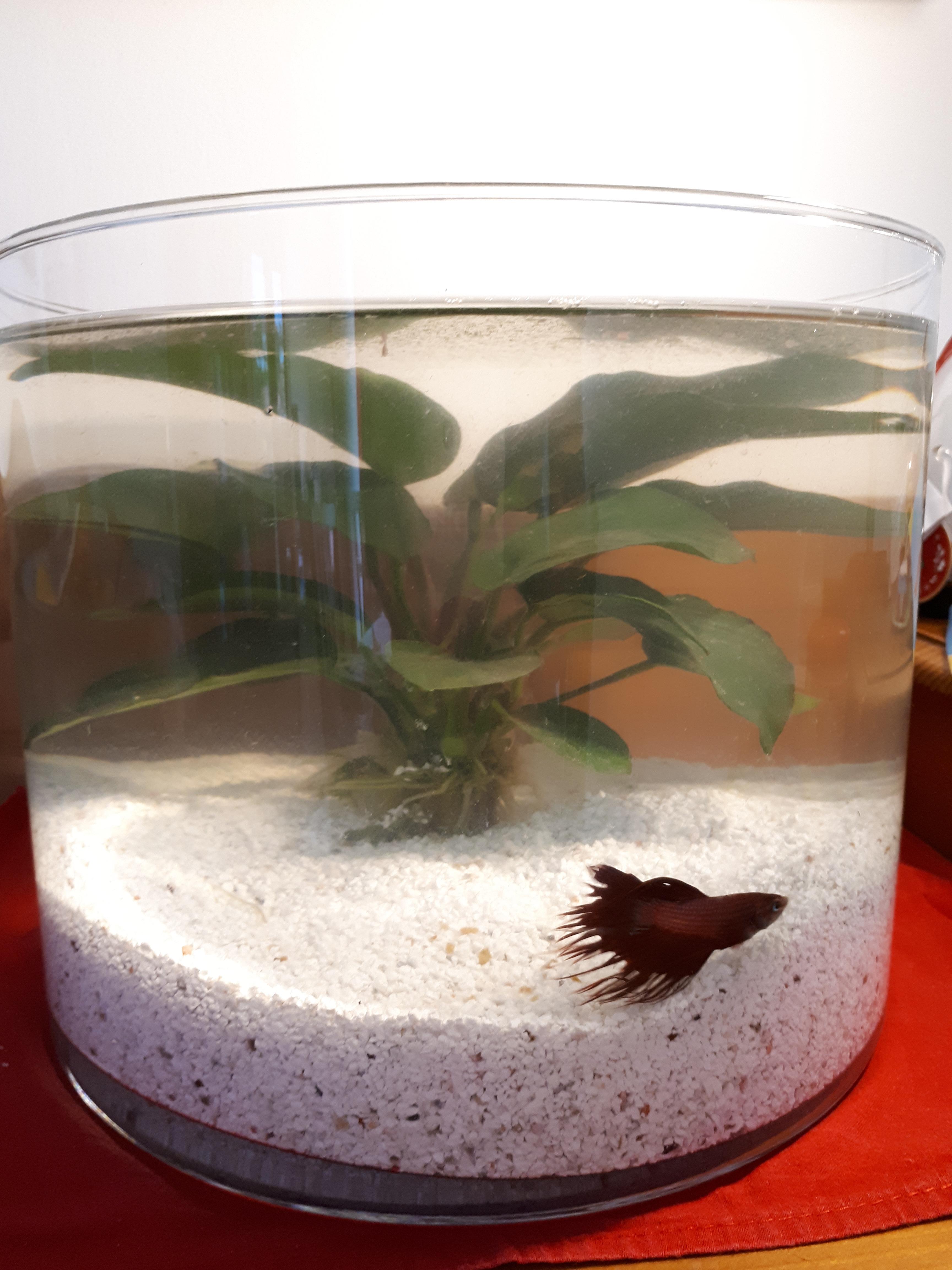 Un aquarium dans un vase cylindrique