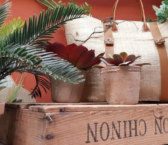 Des plantes en pot qui ne meurent jamais !