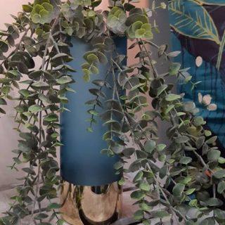 L'eucalyptus, ce n'est pas qu'à suspendre !