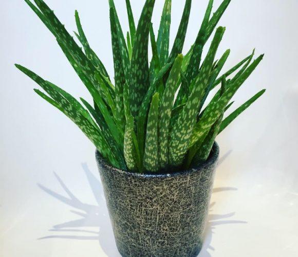 Joli pot pour mon Aloe vera