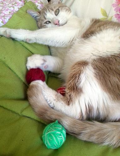Mes jouets pour chat  : des balles en laine