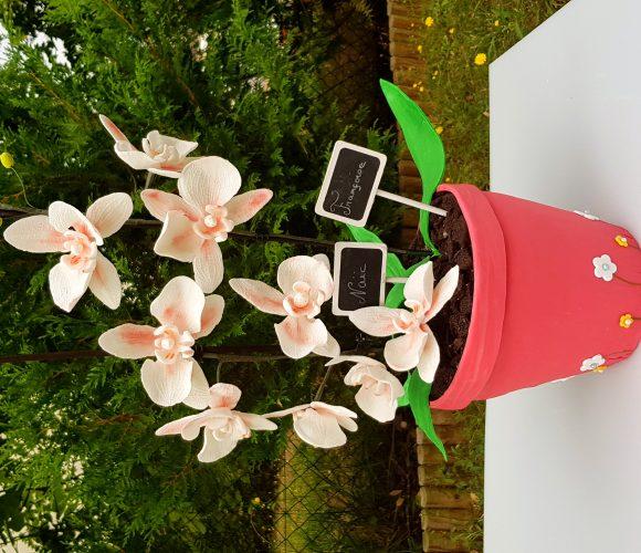 Gateaux orchidées