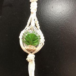 Mini suspension plante