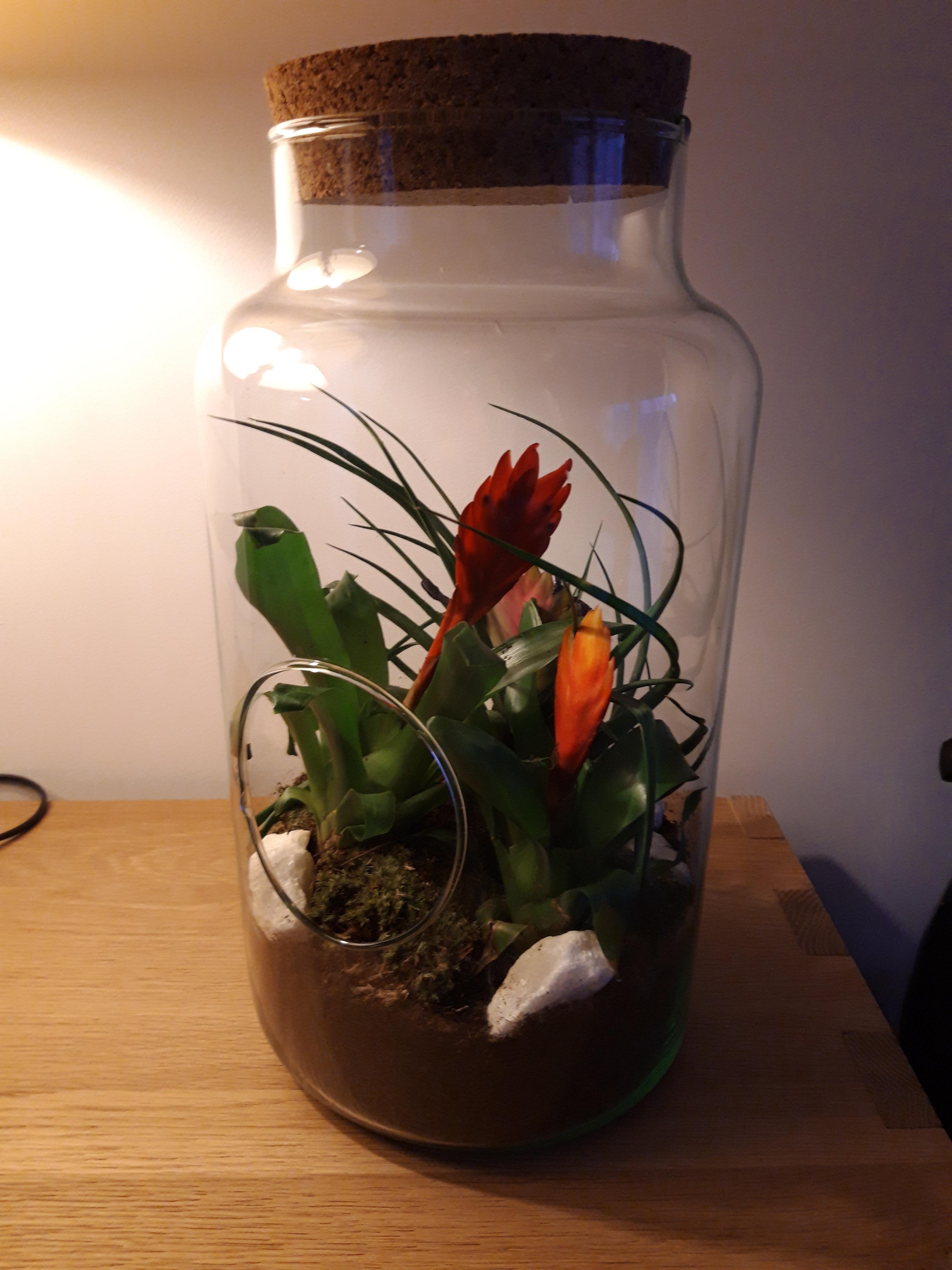 J'ai testé pour vous le terrarium bocal ouvert