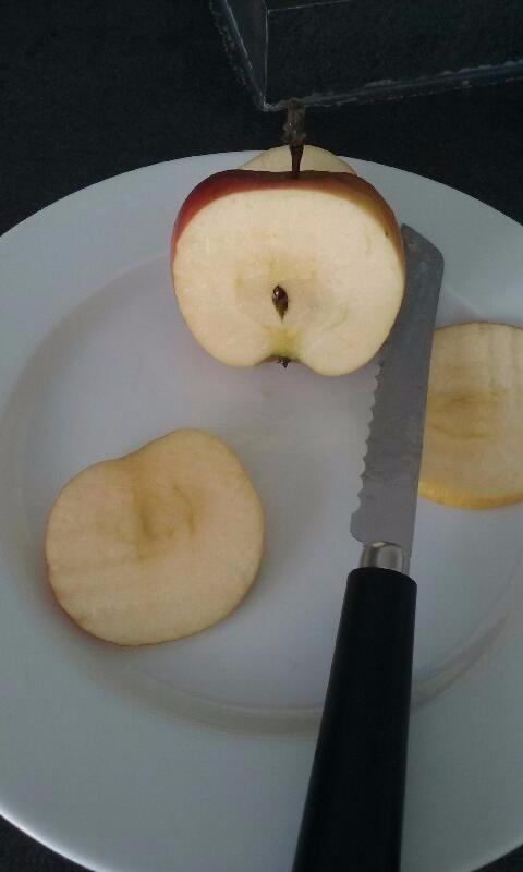 J'ai testé pour vous le couteau scie à tomates manche plastique noir