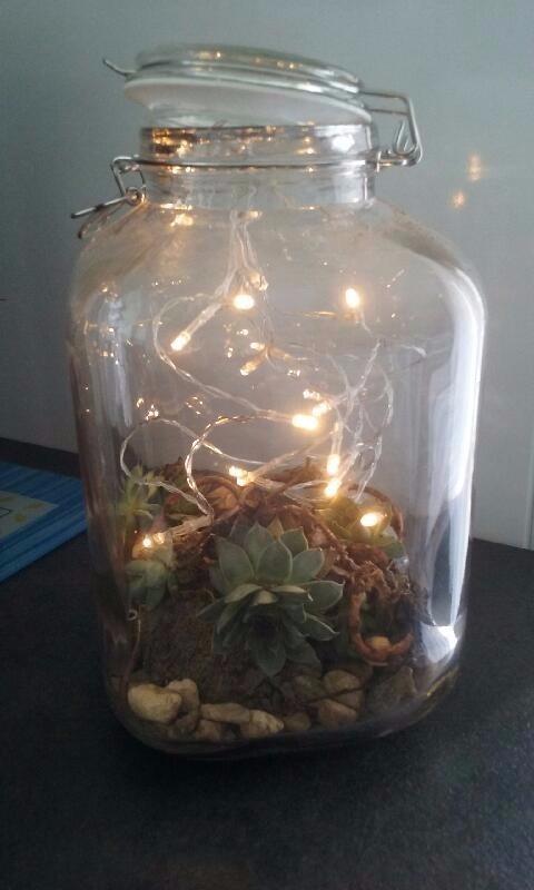 J'ai testé pour vous le terrarium bocal en verre carrée 17x17xh27cm