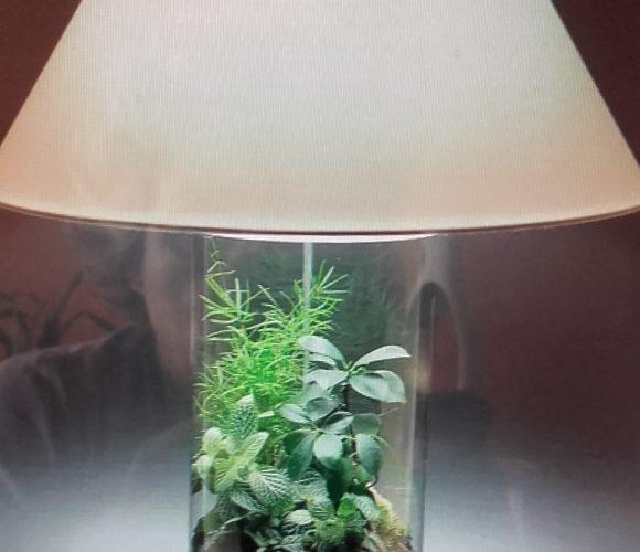 Terrarium lumineux 😮