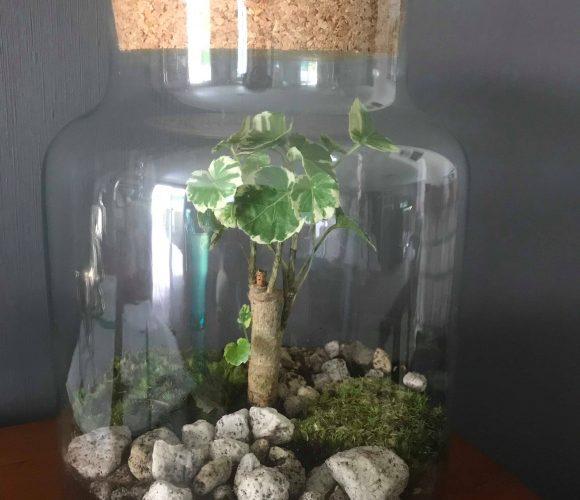 J'ai créé pour vous un jardin d'intérieur !