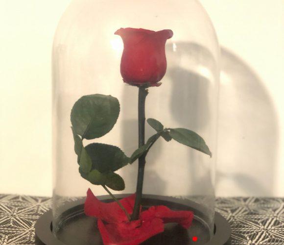 Rose de la belle et la bete