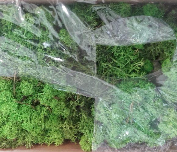 J'ai testé pour vous lichen mica vert  mousse naturelle
