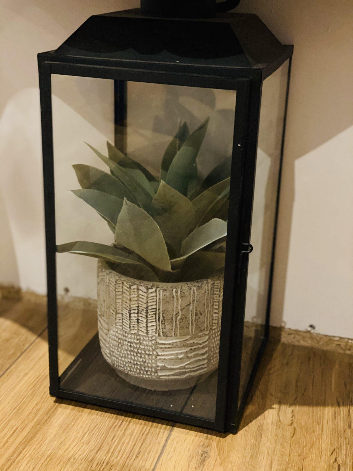 terrarium dans une lanterne