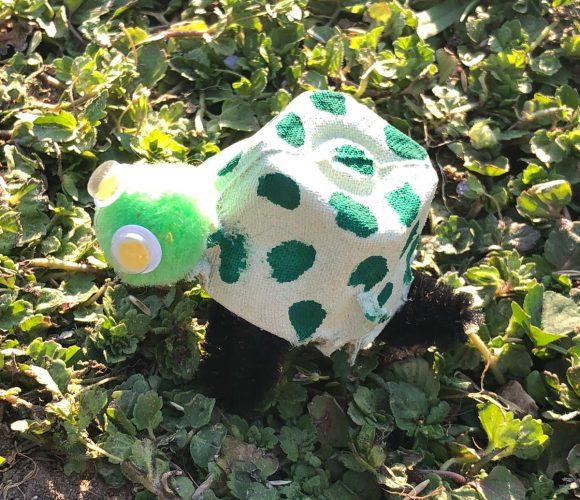 Mes petites tortues