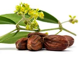 J'ai testé pour vous bienfaits beauté huile de jojoba