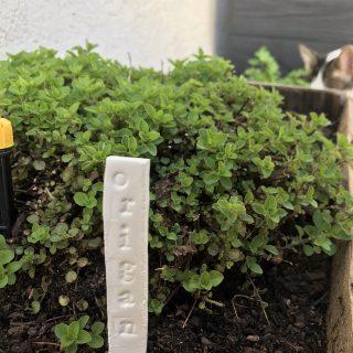 Mes marqueurs de jardin !