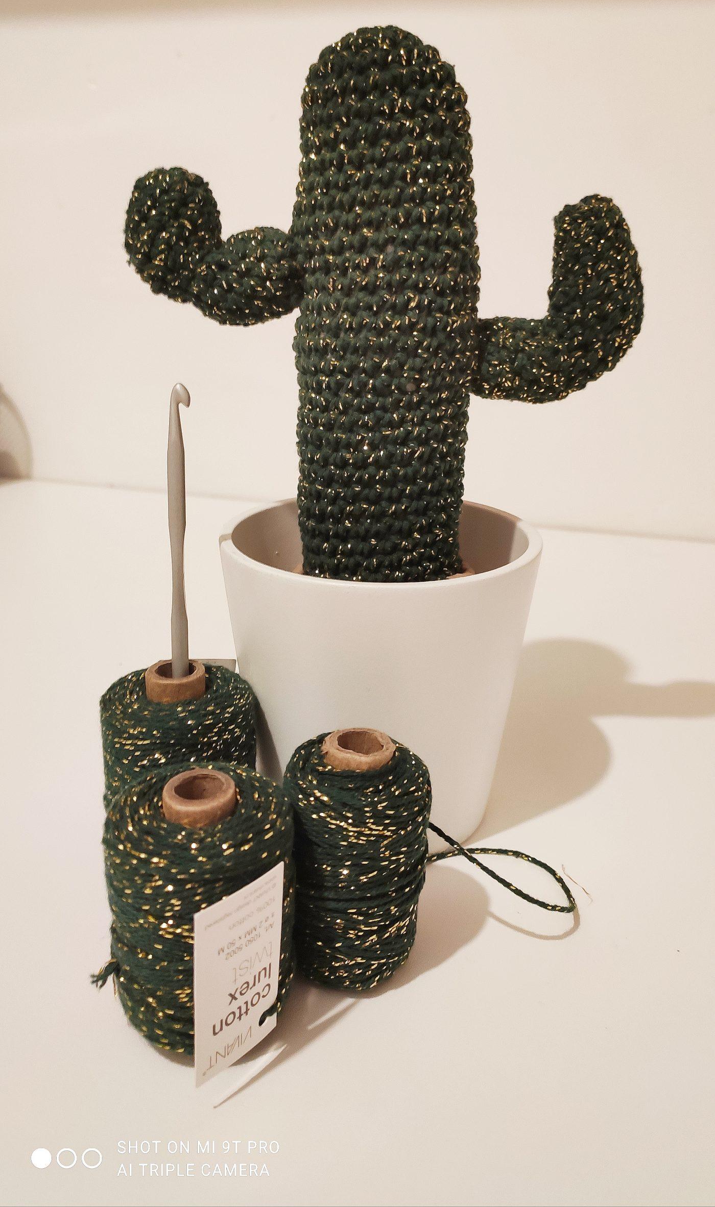Mon petit cactus