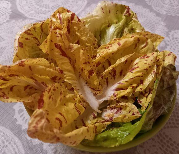 Salade … une belle découverte haute en couleurs 🌈