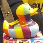 Bienvenue à l'élection de Mister canard !