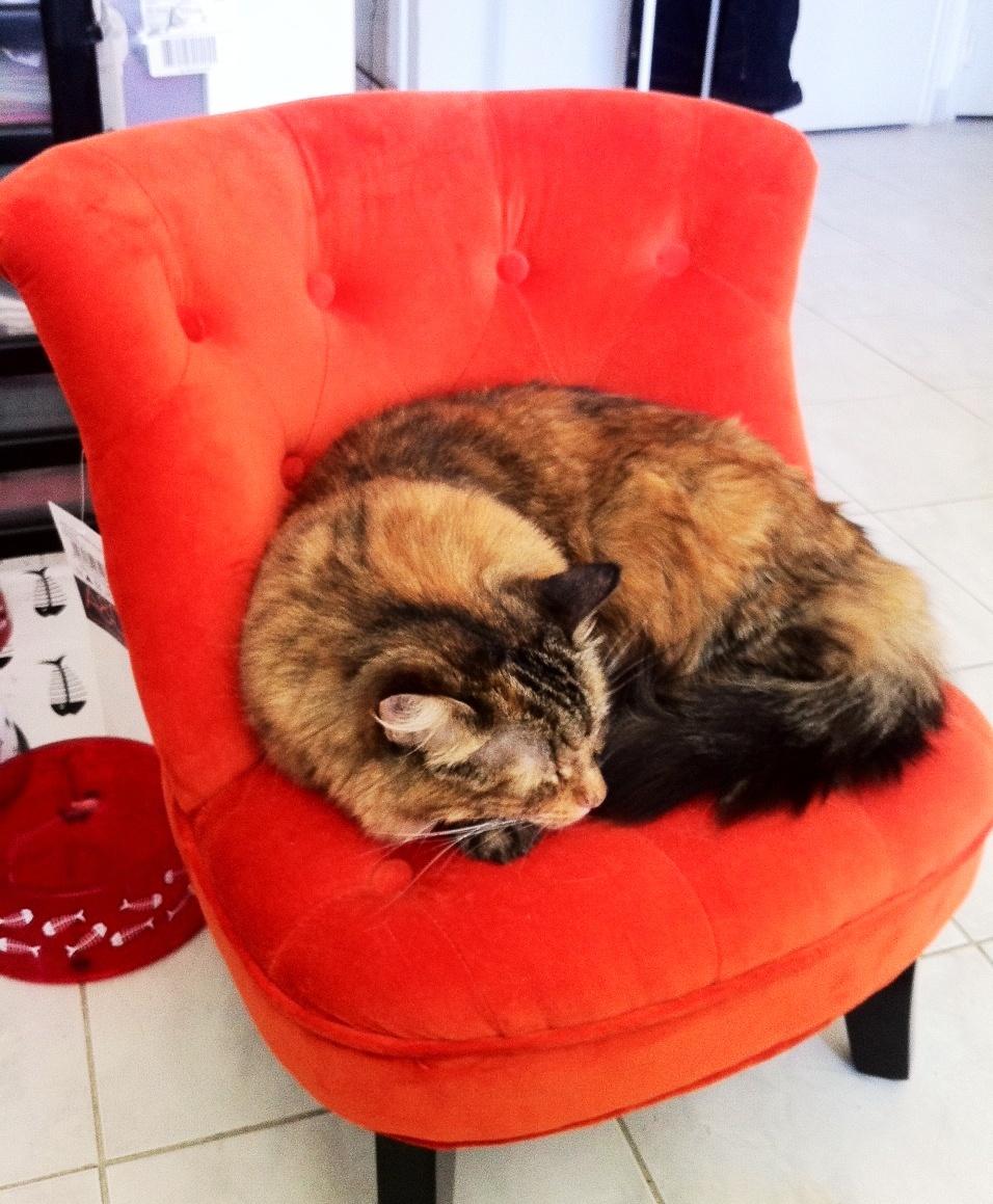 Le mini fauteuil crapaud ou comment jouer à chat perché !!! (blog ...