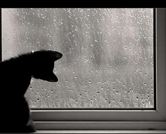Jour pluvieux… ou plutôt jour détente …
