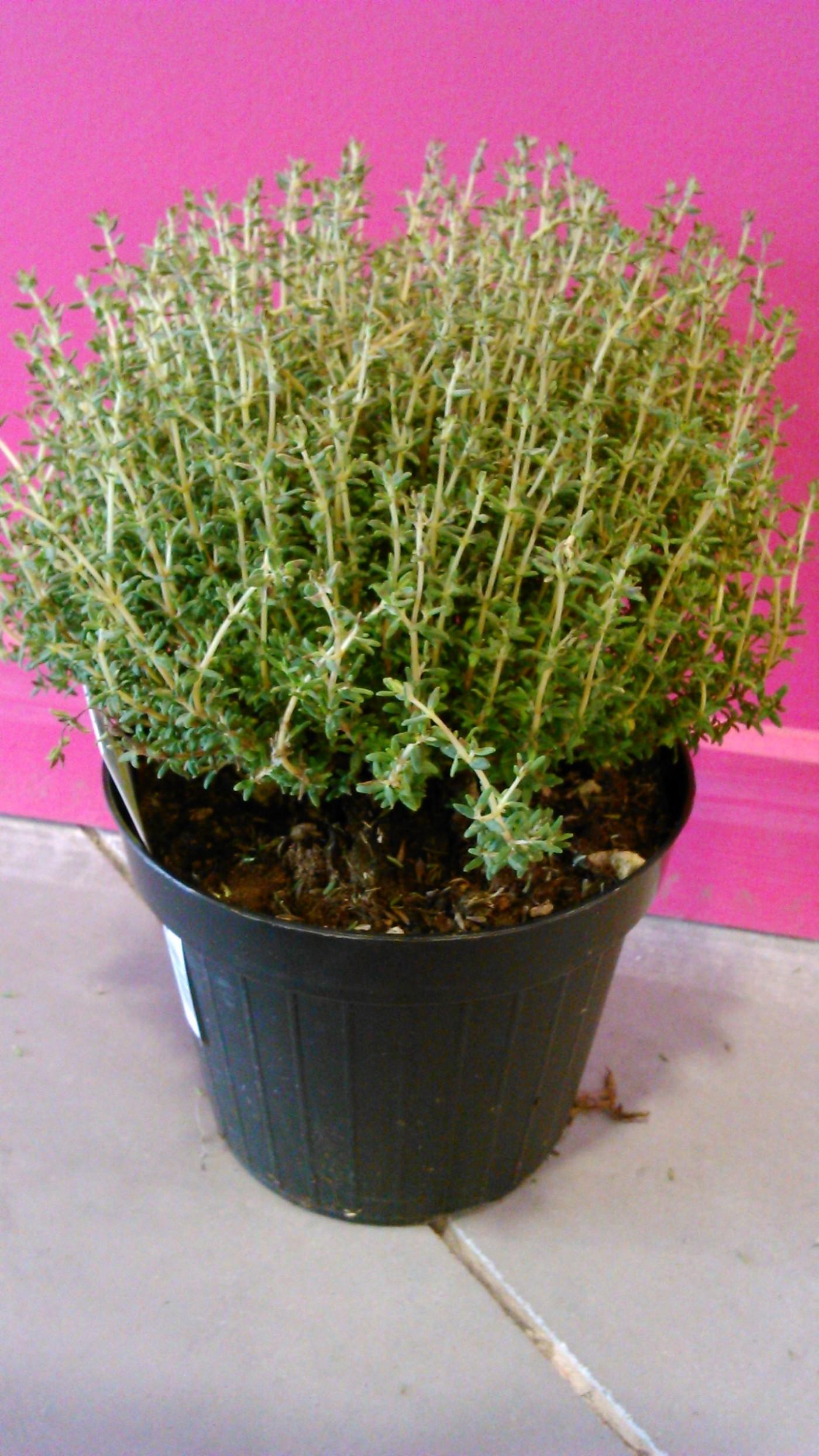 Des plantes belles et utiles !